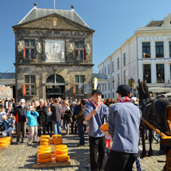 The Gouda Cheese Market in action