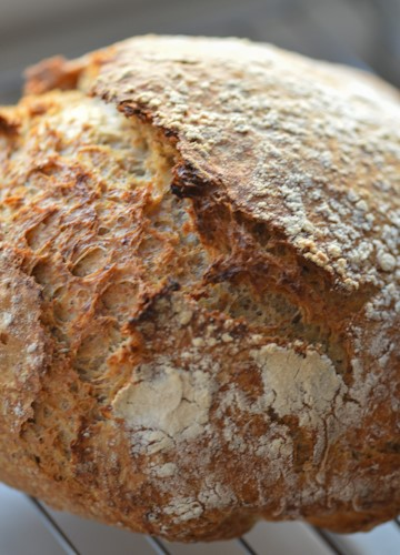 Close up of a tasty crusty looking loaf of no-knead bread